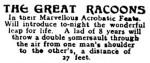 Racoons [NAB 18 Apr 1912, 2]